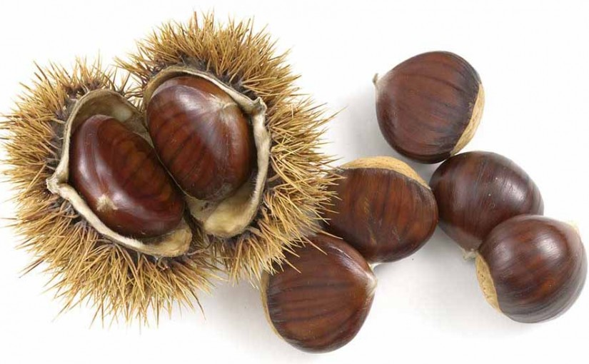 Chestnut Season is too short!