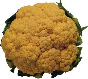 Cauliflower - orange